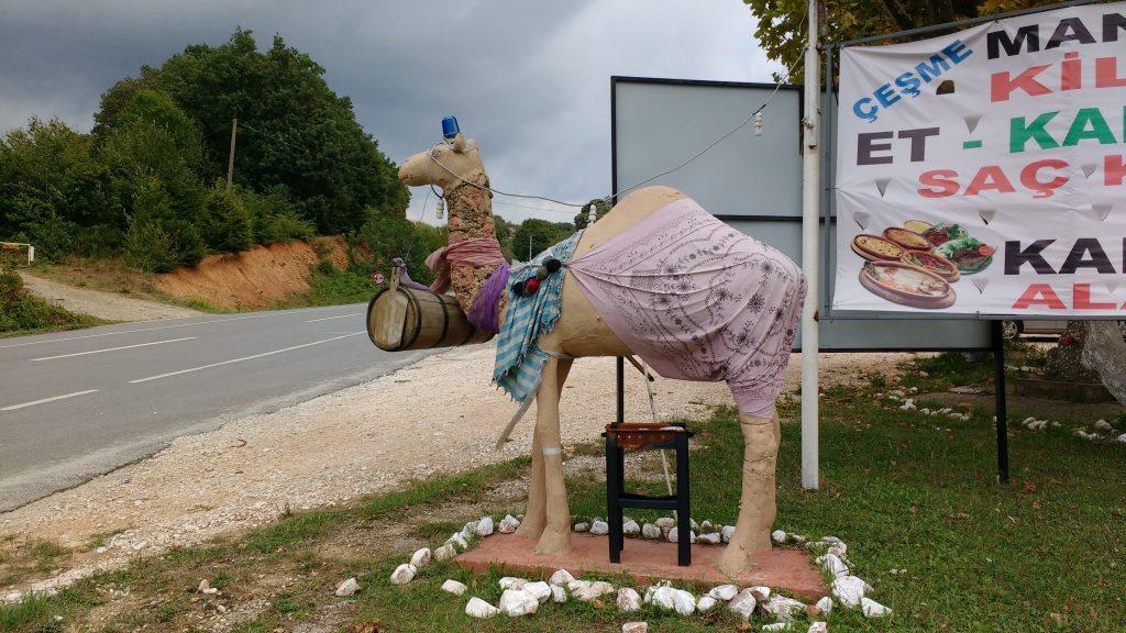 Étrange chameau