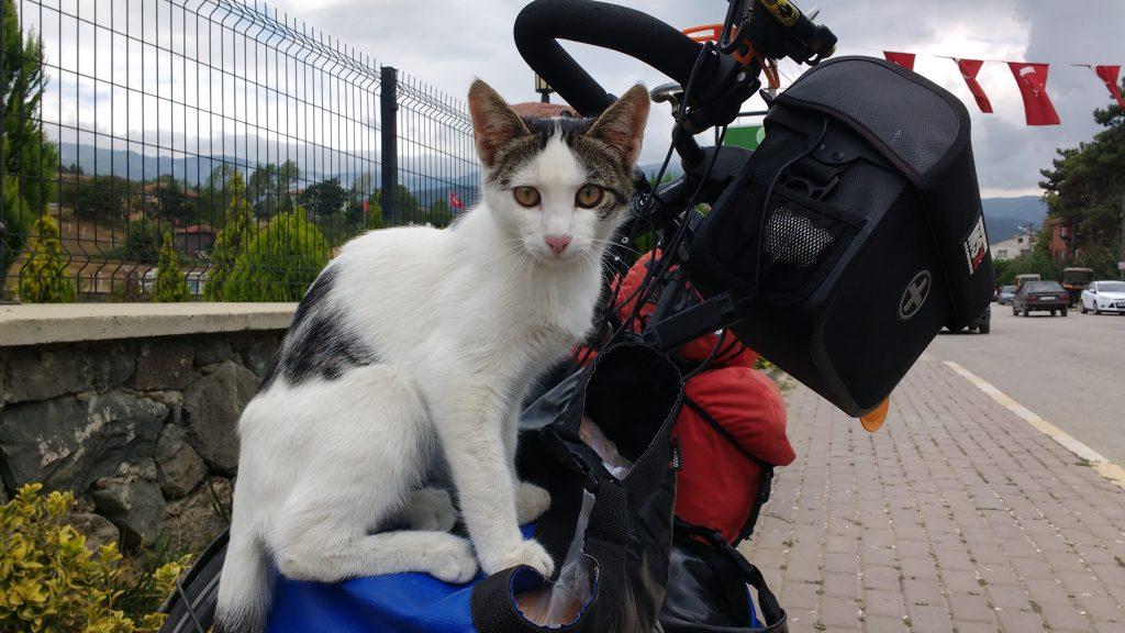 Petit chat en Turquie