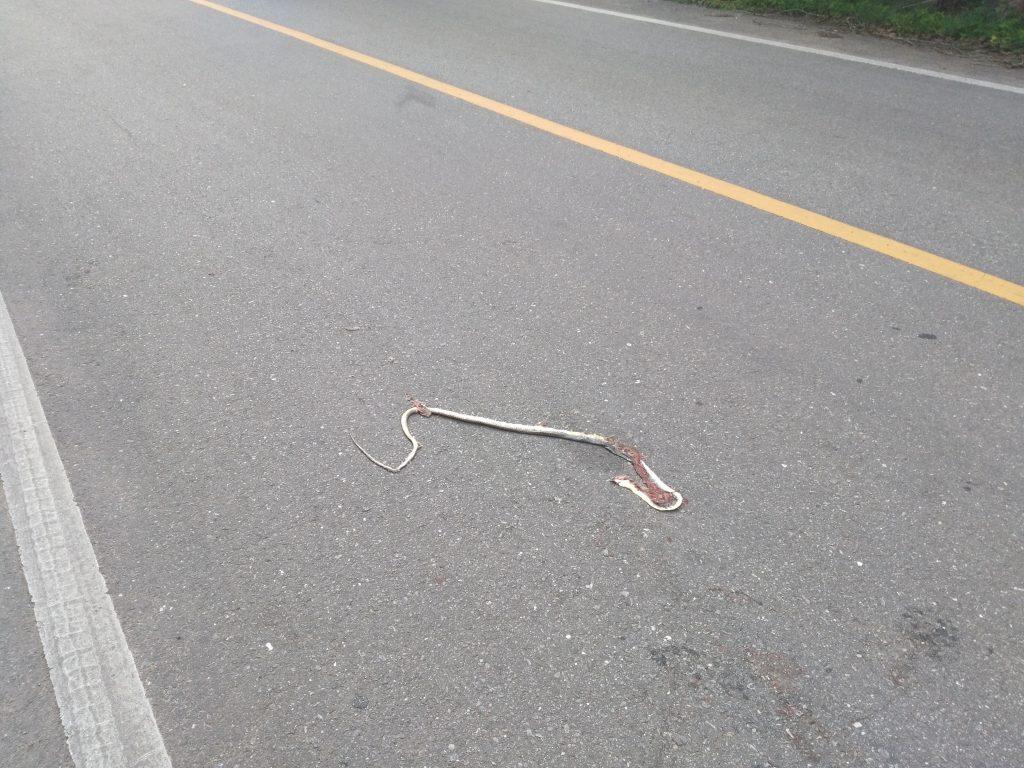 Oh le serpent trop mign... Ah bah non.
