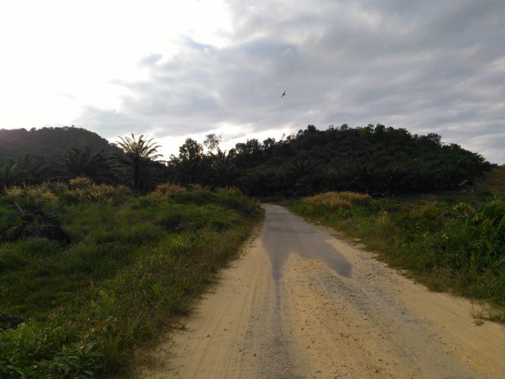 Petite route entre les palmiers à huile