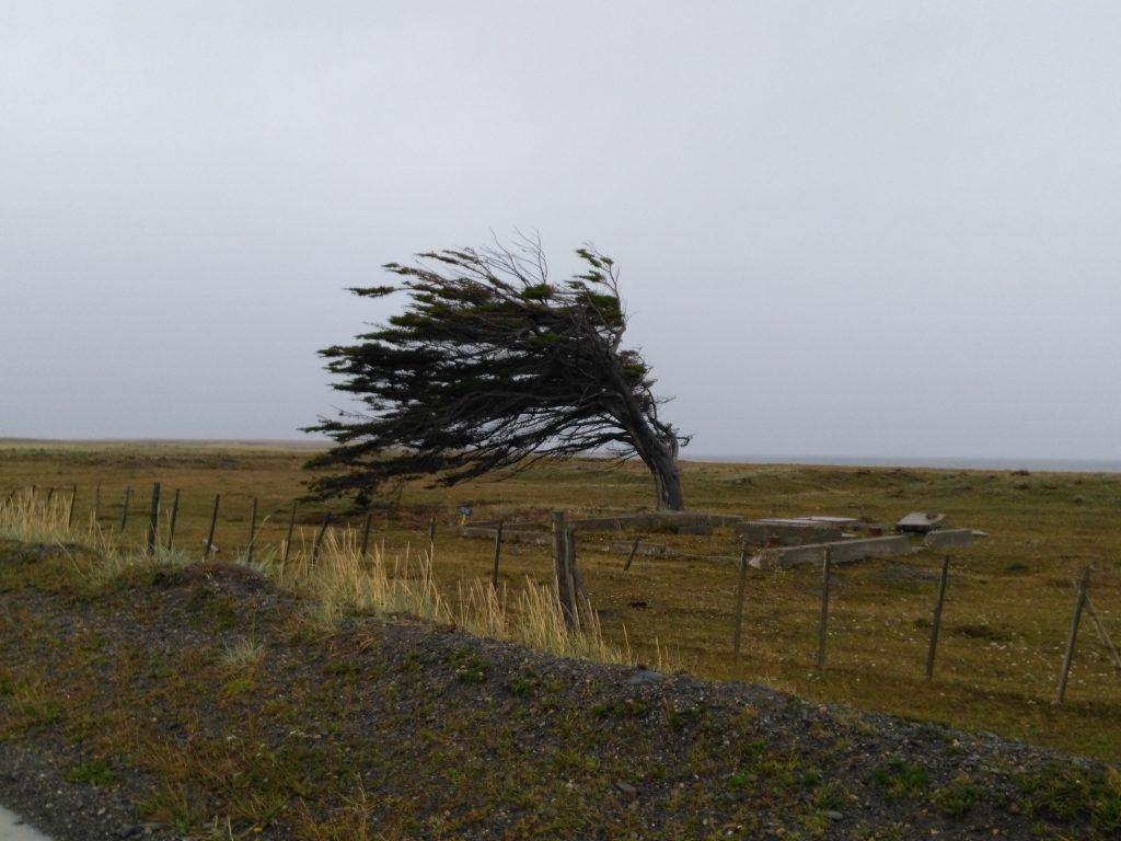 L'arbre du vent